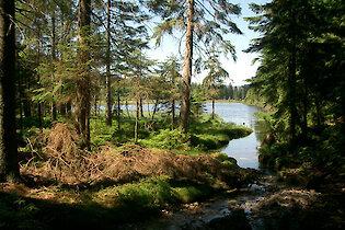 Arbersee Bayerischer Wald