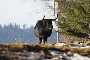 Bayerwald-Tierpark Lohberg im Bayerischen Wald